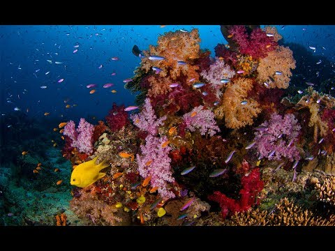 Regulated vs. unprotected Pacific reefs and warming