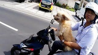 Bikers VS Animals - Let