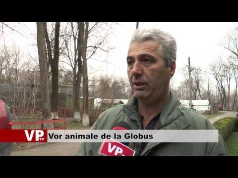 Vor animale de la Globus