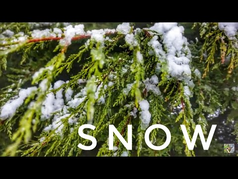 SNOW In Ireland 2017 | Sony a5000