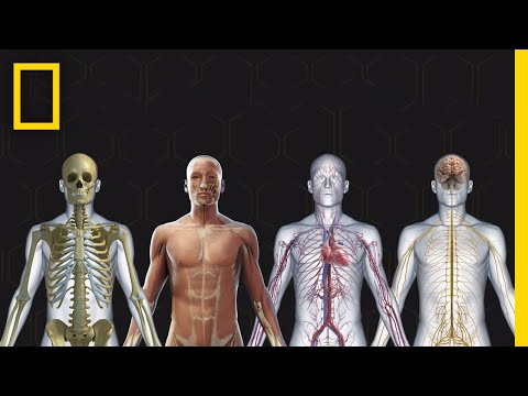 Human Body 101 | National Geographic
