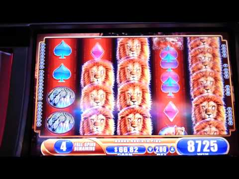 King of Africa Max Bet Bonus WMS Slot Machine