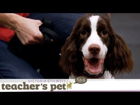 Loose-Leash Walking Inside %7C Teacher%27s Pet With Victoria Stilwell