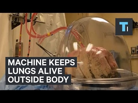 The experimental machine keeps lungs alive outside of the body for transplant