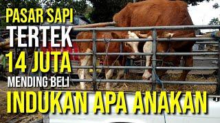Video Pasar Sapi Wage Pare Kediri, 14 Juta mending beli Sapi Indukan apa Sapi Anakan? MP3, 3GP, MP4, WEBM, AVI, FLV Agustus 2019
