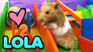 Nuevo HAMSTER Sirio juega en el circuito Arcoiris - Nombres de Nuestros dos hamsters Bebes