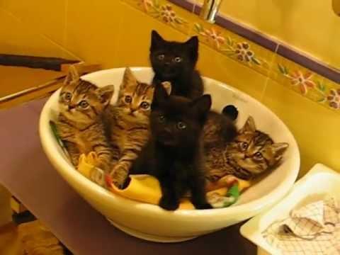 5隻可愛小貓看這邊!!