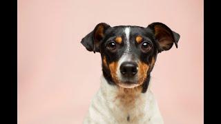Quem maltratar cachorro e gato pode pegar até cinco anos de prisão. Projeto vai à sanção