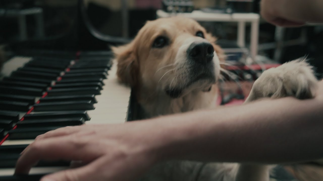 when you want to play guitar solos like the eagles but your russian parents made you learn piano