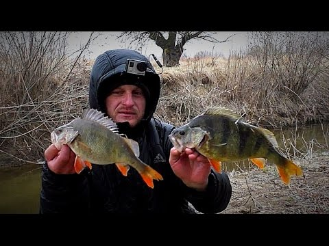 весенняя рыбалка на окуня в мае