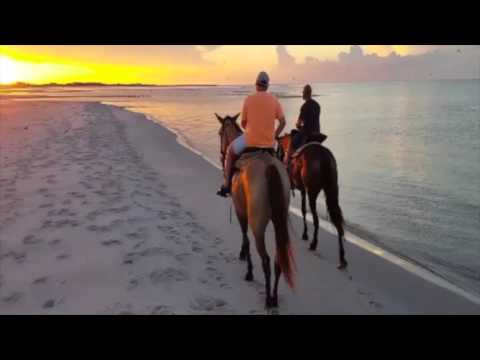 Horse Riding at Cedar Island Beach