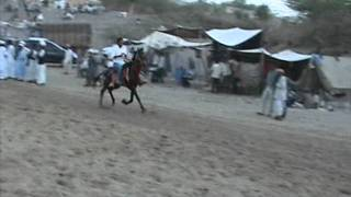 Nonton Fastest horse in balotra fair 2011 Film Subtitle Indonesia Streaming Movie Download