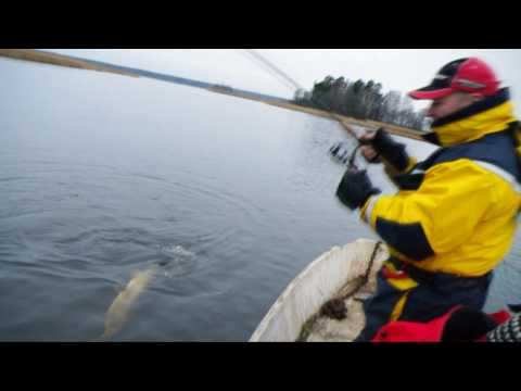 рыбалка в ленинградской области март 2017