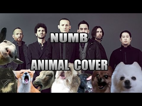 Animals Sing Linkin Park s Numb