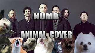 LINKIN PARK – NUMB (ANIMAL COVER) :D