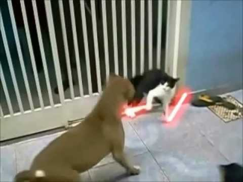 The Ultimate Jedi Cat