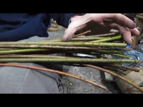 Подготовка ивы для плетения