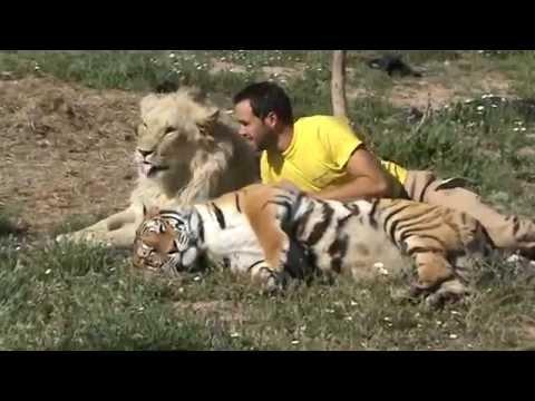 io, una tigre e un leone - videodiario di un uomo speciale