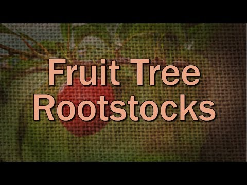 Fruit Tree Rootstock Basics – Family Plot