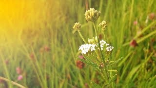 In search for wild flowers - What growing in my country