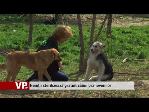 Nemții sterilizează gratuit câinii prahovenilor