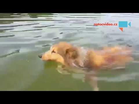 Plavu si, ani nevím jak, vždyť nemám prsa, nemám znak!!