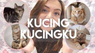 Video PERKENALAN KUCING - KUCINGKU | MY CATS DIARY #1 MP3, 3GP, MP4, WEBM, AVI, FLV Agustus 2017