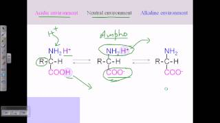 Amino acid structures (part 2)