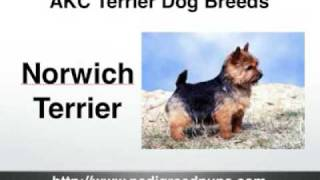 Terriers - AKC Terriers - AKC Terrier Dog Breeds