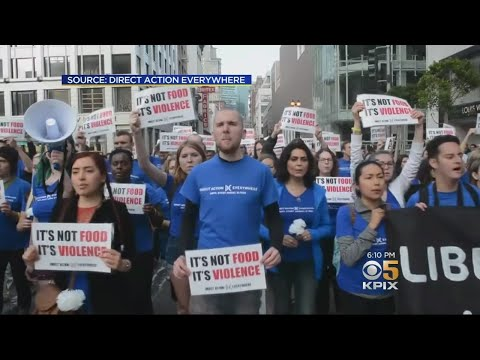 Whole Foods Takes Legal Action Against Berkeley Animal Rights Group