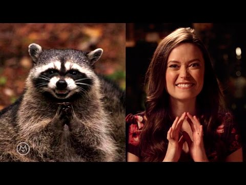 Summer Glau Imitates Popular Animal Memes