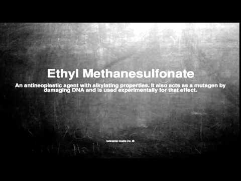 Medical vocabulary: What does Ethyl Methanesulfonate mean