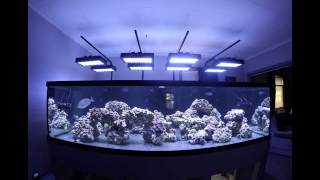 All Day Time Lapse of the 500 Gallon Tank