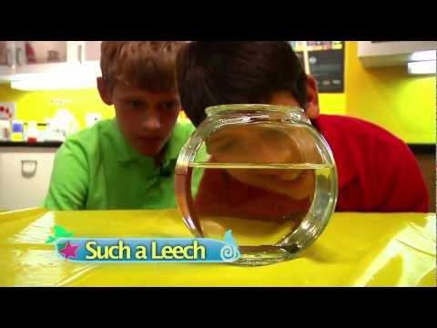Such A Leech
