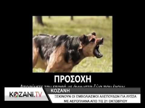 ΕΜΒΟΛΙΑΣΜΟΙ - Από τις 21 Οκτωβρίου ξεκινά στην Κοζάνη ο εμβολιασμός αλεπούδων κατά της λύσσας με δολώματα από αεροπλάνα. Τι πρέπει να προσέξουν οι...