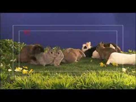 Watch 'Making of Bunny Ads'