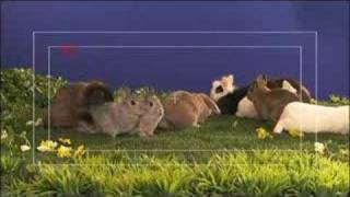 Crazy Bunnies Spoil TV Shoot