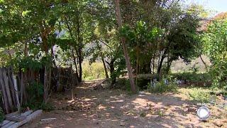 Policia apreende 150 quilos de maconha na zona norte de Marília