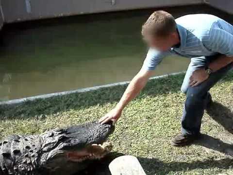 這個人不斷挑逗鱷魚,最後差點GG