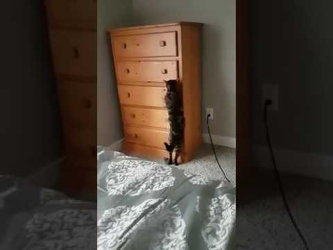 My friend's cat likes to play hide and seek!
