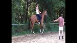 Jak se jezdec stává koňským somatopsychologem
