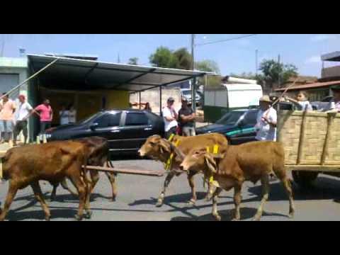 Primeiro Grande Encontro de Carros de Boi do Município de Perdigão, Minas Gerais