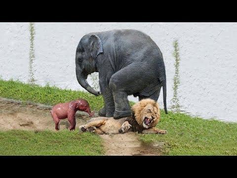 LIVE: Wild Animals Fight Powerful Lion vs Elephant Crocodile vs Jaguar  Discovery Animals 2018
