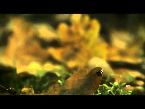 Video Secret Garden - Autumn melody download in MP3, 3GP, MP4, WEBM, AVI, FLV January 2017