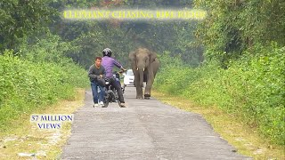 Video Elephent Chasing Bike Rider. MP3, 3GP, MP4, WEBM, AVI, FLV November 2017