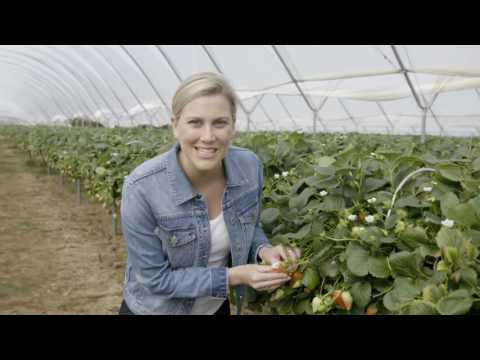 Driscoll's Delicious Ripe Strawberries | Everyday Gourmet S6 E24