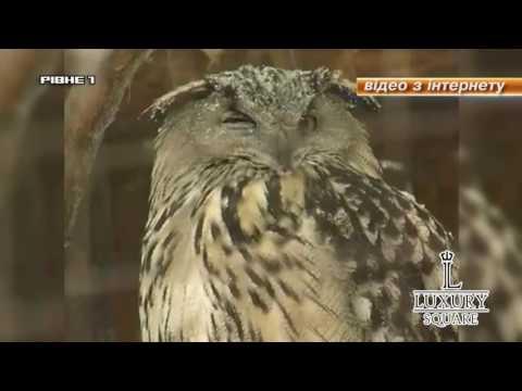 Зоопарку Рівного виділять більше двох мільйонів гривень [ВІДЕО]