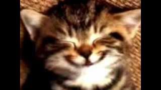 Gatito Canta Feliz Cumple