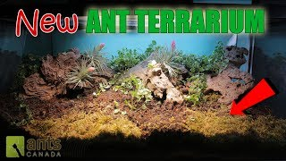 """Click here to SUBSCRIBE: https://goo.gl/tlCQJZBuilding a brand new terrarium is exciting but the ant colony you wanted to move in here died, so who will inherit this giant new terrarium? Watch and see who you voted for! Also, we launch our first round of flag voting for one of our ant colonies on this channel.LINK to thread for flag submissions: http://forum.antscanada.com/viewtopic.php?f=30&t=3856Photo of Tricomes by Lloyd Godman http://www.lloydgodman.net/Photosynthesis/PHoToS/Misc/glossary/trichome.htmlVisit us at http://www.antscanada.com CLOSE CAPTIONING """"CC"""" available for this video. Please feel free to contribute to translating/CCing this video into another language: http://www.youtube.com/timedtext_cs_panel?tab=2&c=UCONd1SNf3_QqjzjCVsURNuAA brand new video is uploaded on this channel every Saturday at 8AM EST (with frequent bonus videos) so be sure to SUBSCRIBE to the channel to catch every ant video we release! Thank you for the support.▶▶▶We've got new Ant T-shirts! Check them out here: https://goo.gl/PjnB7t▶▶▶Got a question about ants or AntsCanada? Visit our website FAQ: https://goo.gl/mJPEqn▶▶▶Want an ant farm? Check out our ant shop. We ship worldwide: http://goo.gl/I4l7Ho ▶▶▶Need to buy an ant colony for your ant farm, or do you have ant colonies to sell/give away? Find out more about our GAN Project: http://goo.gl/jzo9LcClick here to watch every video we have ever made: https://goo.gl/8zNkImFire Ant (Solenopsis geminata) playlist: https://goo.gl/Dlu7PZBlack Crazy Ant (Paratrechina longicornis) playlist: https://goo.gl/FsKLzKYellow Crazy Ant (Anoplolepis gracillipes) playlist: https://goo.gl/ZQCCUwAnts REACT Series & Other Time Lapse Video playlist: https://goo.gl/BVuLeAAntsCanada Tutorial Playlist: https://goo.gl/8dQnwbJoin us at the new AntsCanada Ant Forum: http://forum.antscanada.com▶AntsCanada Official Website http://www.antscanada.com▶Like us on http://facebook.com/antscanada ▶Follow us on http://twitter.com/antscanada▶Follow us on http://www.in"""