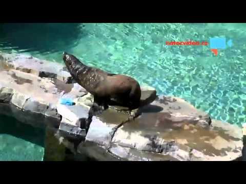 Jak slon drbe na lopatce a lachtan se snaží nasadit kšiltovku